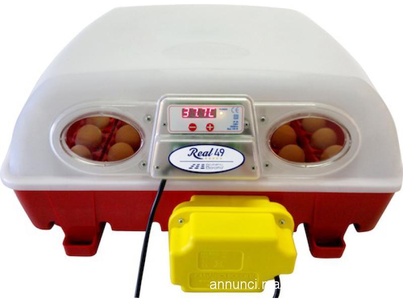 Incubatrice real borotto 49 uova automatica